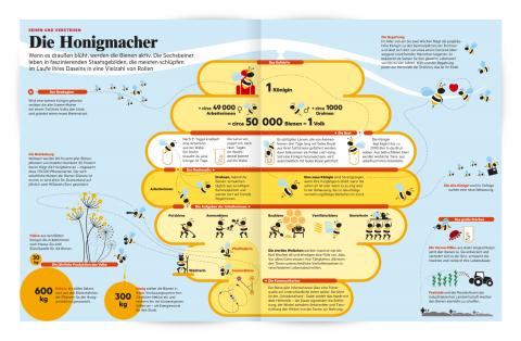 bienen Infografik 2D